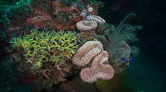 Sea lily Crinoids among coral and fish in the sea. Stock Footage