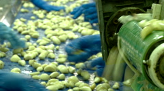 Garlic processing ,  production and selection at the factory. - stock footage