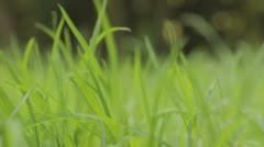 steps on the grass - stock footage