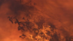 A shrub amid roaring flames is smashed by a falling charred beam Stock Footage