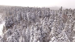 Aerial View Flight Above Winter Forest 11 Stock Footage