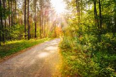 Path Road Way Pathway On Sunny Day In Summer Sunny Forest at Sun - stock photo