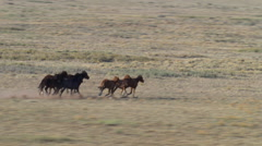 Aerial view of wild horses running on Arizona mesa Stock Footage