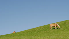 A horse grazing in green mountain pasture Stock Footage