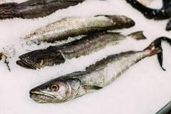 Fresh fish merluza or hake on ice on market store shop Stock Photos