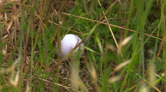 Zoom-out from ball in weeds to manicured golf course, cart and players in Stock Footage