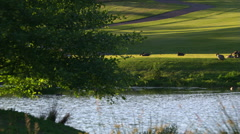 Right pan over pond on golf course with waterfowl swimming or resting on shore Stock Footage