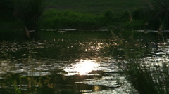 Ducks swimming on a secluded pond - stock footage