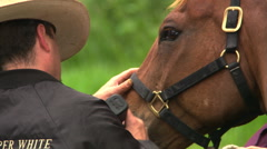 Close-up of cowboy shaving the muzzle of a horse Stock Footage