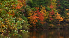 Shoreline trees in autumn foliage reflected in a placid lake Stock Footage