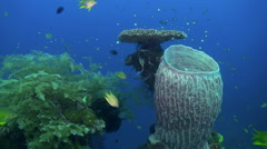 Hard Stony corals  and colorful fish in blue sea. Stock Footage