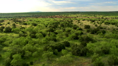 Flying over brushy green rangeland cut by ravines Stock Footage