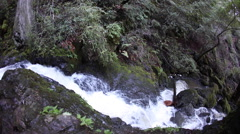 Stream Flowing Through California Forest Stock Footage