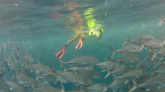 Person swimming among shoal of jack fish in tulemben in Bali, Indonesia - stock footage