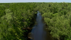 Flight past treetops along a Louisiana bayou with flying birds leading the way - stock footage