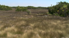 Flight over marshy grassland and trees to wide view of rural Florida landscape - stock footage