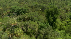 Flight over extensive Florida forest Stock Footage