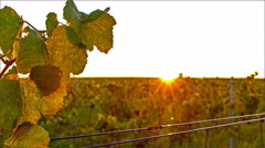 Time lapse of sunset over vineyard valley Stock Footage