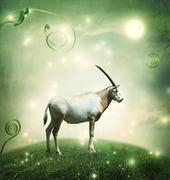 White oryx under the moon Stock Photos