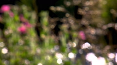 Wildflowers and grasses at edge of stream, first viewed in soft focus Stock Footage