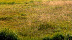 Tilt-up across meadow grass to lake and forest in background Stock Footage