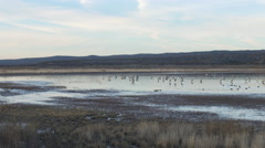 Wide Pan From Waterfowl to Row of Photographers - stock footage