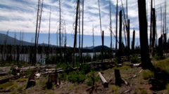 New growth among standing dead trees on an old wildfire site beside a lake - stock footage