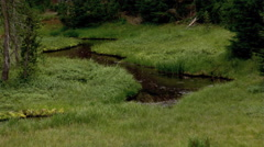Stream meandering through a green mountain meadow near young trees - stock footage