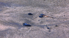 Stock Video Footage of Crude oil lying on contaminated beach