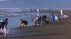 Volunteers with absorbent pads cleaning oily beach Stock Footage