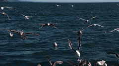 Gulls in ultra-slow motion on sea and in air Stock Footage