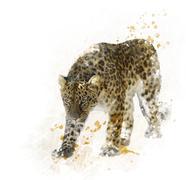 Digital Painting of  Leopard - stock illustration