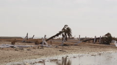 Toppled palm trees and broken fencing along beach Stock Footage
