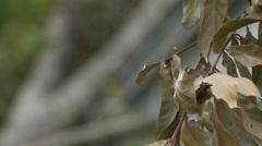 Rack focus of dying leaves near tree branches lying on a roof after a hurricane Stock Footage
