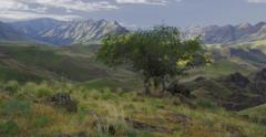 High Desert canyons, green from spring rains, Imnaha River OR Stock Footage