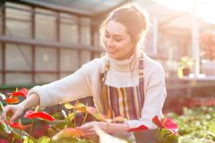 Happy pretty young woman gardener taking care of anthuriums - stock photo