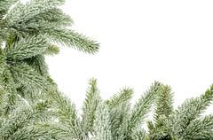 Green Christmas tree isolated on white Stock Photos