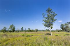 Wide moor landscape with some trees in the High Fens, Eifel, Belgium with blu - stock photo
