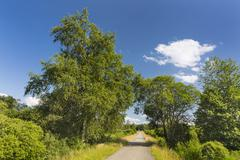 A road leading through wide moor landscape with some trees in the High Fens,  - stock photo
