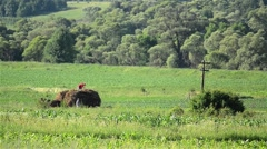 Farmers had gathered a cartful hay on the field and preparing to take him home Stock Footage