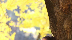 Beautiful brunette woman leaning against a tree and singing Stock Footage