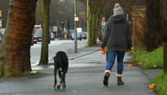 Dog walker, Crystal Palace, London. Stock Footage