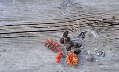 Plants and Pebbles on Old Board - stock photo