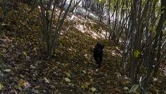 He called the black dog that comes on a narrow path in the woods 205 Stock Footage