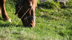 Brown horse graze in a field with short grass and green 83 Stock Footage