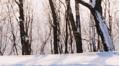 A number of trees out of focus in the foreground snowflakes are flying - stock footage