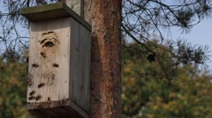 Entrance hornets nest of wasps in bird nesting box. 4K Stock Footage