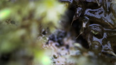 4k Extreme macro zoom of moss in winter Stock Footage