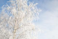 Sunny clear weather with hoarfrost in winter - stock photo