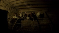 Several chickens are sitting in the dark in the chicken coop on an iron bar - stock footage